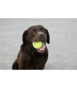 Tennisbal HOND DURA